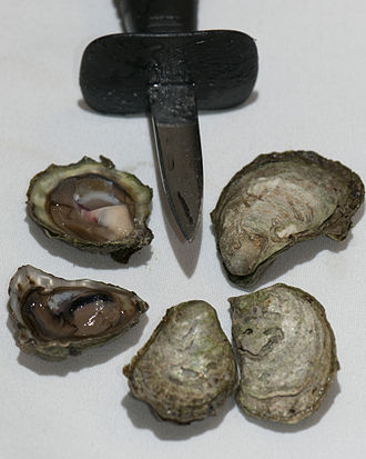 Ostrea lurida - Olympia oysters and shucking knife for scale