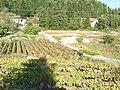 Otok Korčula04528.JPG