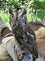 Owl (10997843095).jpg