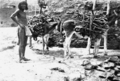 PSM V55 D768 Oraibi man transporting firewood with burros.png