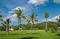 Paddy field in Kerala.jpg