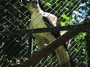 Pag-asa, The Philippine Eagle Center, Malagos,...