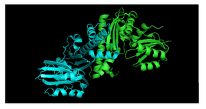 Pantothenate kinase - Fig. 2 Dimer structure of PanK-III