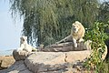 Panthera leo - African Lion in Al ain Zoo.jpg