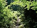 Paprociowa polana - panoramio.jpg