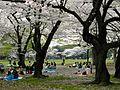Parc Yoyogi-koen (11).jpg