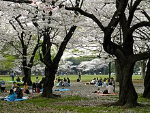 Parc Yoyogi-Koen (11) .jpg