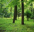 Parcul Copou (perspectivă cu arbori) (10).jpg