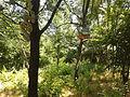 Park Lauta 13.jpg
