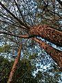 Parque Estadual da Cantareira na área do Núcleo Engordador.jpg