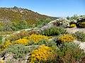 Parque Natural de Montesinho Porto Furado trail (5732590577).jpg