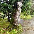 Parque Terra Nostra, Furnas, S. Miguel, Açores,Portugal - panoramio (3).jpg