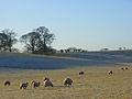Pasture, Carleton - geograph.org.uk - 640951.jpg