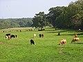 Pasture, Odiham - geograph.org.uk - 956893.jpg