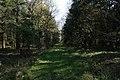 Pasture Wood near Kirkby Underwood - geograph.org.uk - 405217.jpg
