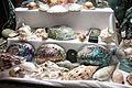 Paua and other shells collection, Canterbury Museum, 2016-01-27.jpg