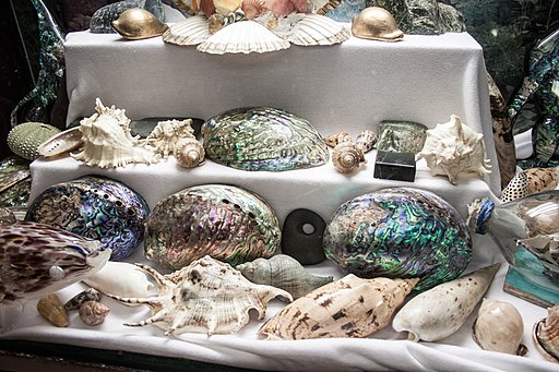 Paua and other shells collection, Canterbury Museum, 2016-01-27