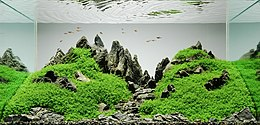 Aquarium with multiple gray stones. The stones are arranged to be low in front and high in the back, with the stones along the back placed vertically in the shape of mountain peaks. Some of the stones are carpeted with small, low, fine, green plants.