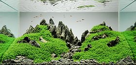 Aquarium with multiple gray stones. The stones are arranged to be low in front and high in the back, with the back-most stones placed vertically in the shape of mountain peaks. Some of the stones are carpeted with small, low, fine green plants.