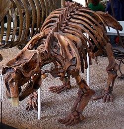 A Medley of Potpourri Quaternary extinction event