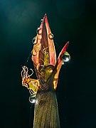 Phyllostachys Aureosulcata 'Spectabilis -20200524-RM-073500.jpg
