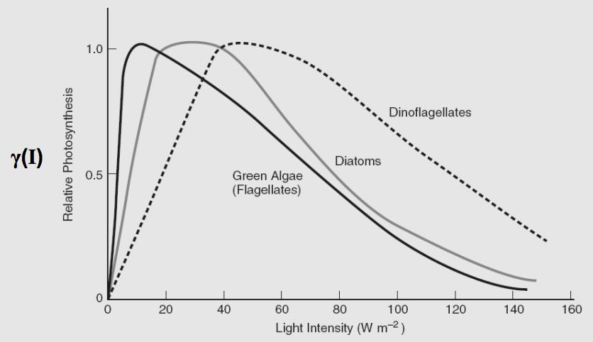 Phytoplankton Intensity