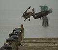 Pier Landing (8261700014) (2).jpg