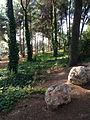 PikiWiki Israel 44738 trees in BIRYA.jpg
