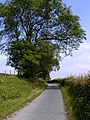 Pilgrim's Way at Wrotham Water - geograph.org.uk - 463753.jpg