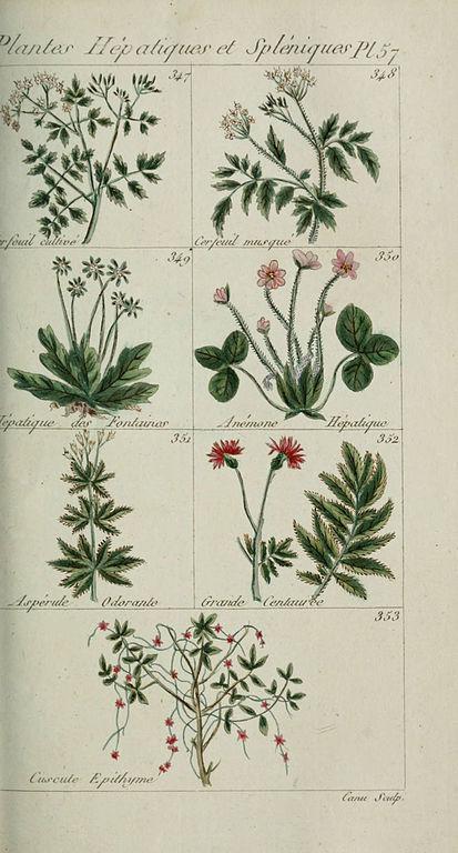 File plantes usuelles indig nes et exotiques pl 57 for Plante exotique