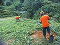 Planting project, Denawaka Ganga Mini Hydro Power Project.jpg