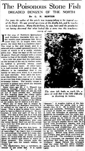 Synanceia - 1936 article from Melbourne newspaper The Argus about venomous stonefish.