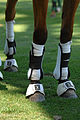 Polo horseleg protection.JPG