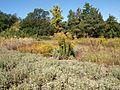 Poltava Botanical garden (73).jpg