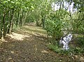 Pond and copse near Little Chessell - geograph.org.uk - 581276.jpg
