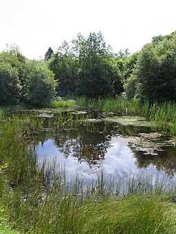 Pond in the Taf Fechan forest - geograph.org.uk - 514881