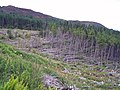 Portree Forest - geograph.org.uk - 858161.jpg