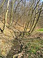 Prague Kunraticky Forest Meadow2.jpg