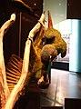 Primolius maracana stuffed specimens Berlin 12.jpg