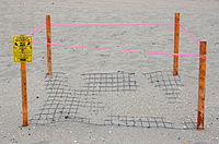 Protected Sea Turtle Nest (Boca Raton FL).jpg