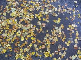 Puddle on street.JPG