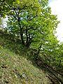 Pulkautal westlich von Pulkau sl4.jpg