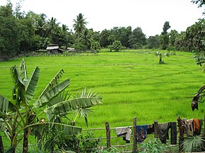 Pursat rice field.jpg