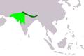Pycnonotus leucotis leucogenys map.png