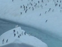 Archivo:Pygoscelis antarctica trying to get to iceberg.wmv.ogv