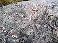 Quartzite & pebbly quartzite with jasper (Lorrain Formation, Paleoproterozoic, ~2.3 Ga; Ottertail Lake Northeast roadcut, near Bruce Mines, Ontario, Canada) 4 (40742683703).jpg