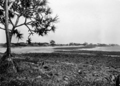 Queensland State Archives 132 Bargara looking north towards Marlua Guesthouse and residences October 1931.png