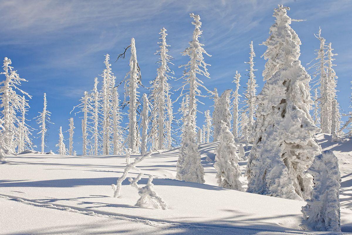 Bayerischer Wald Im Winter