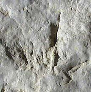Red Gulch Dinosaur Tracksite - Dinosaur footprint at the tracksite.