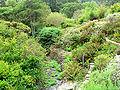 Regional Parks Botanic Garden stream.jpg